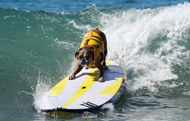 Cães 'radicais' disputam campeonato de surfe na Califórnia
