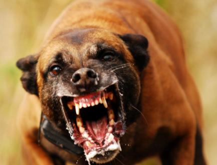 Cão bravo(FOTO ILUSTRATIVA)