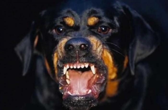 Cão raivoso. Foto ilustrativa: Internet