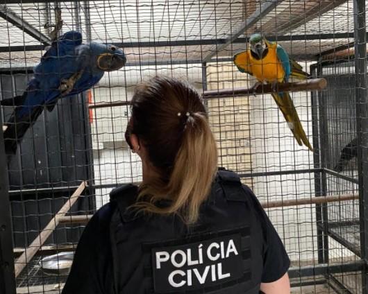 (Foto: Divulgação / PCSC)