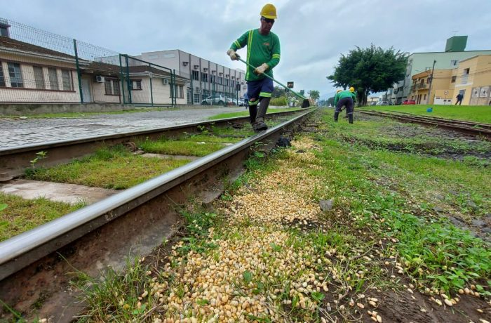 Após notificação, Rumo começa remoção de grãos derramados na linha férrea