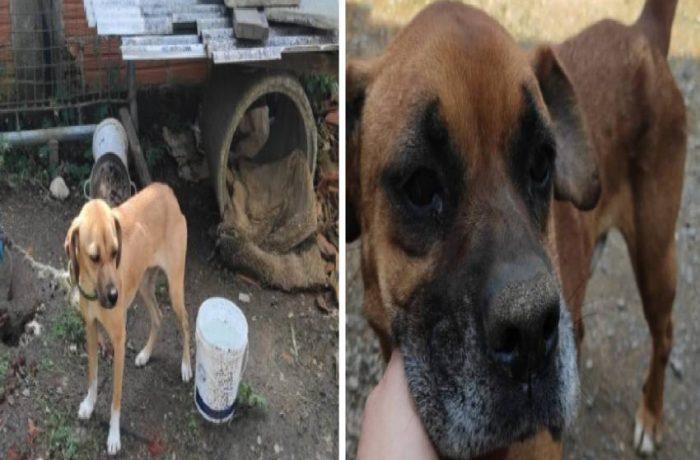 Cães são encontrados sem água e comida em residência em Jaraguá do Sul