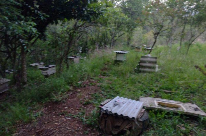 Homem morre após ser atacado por enxame de abelhas em SC